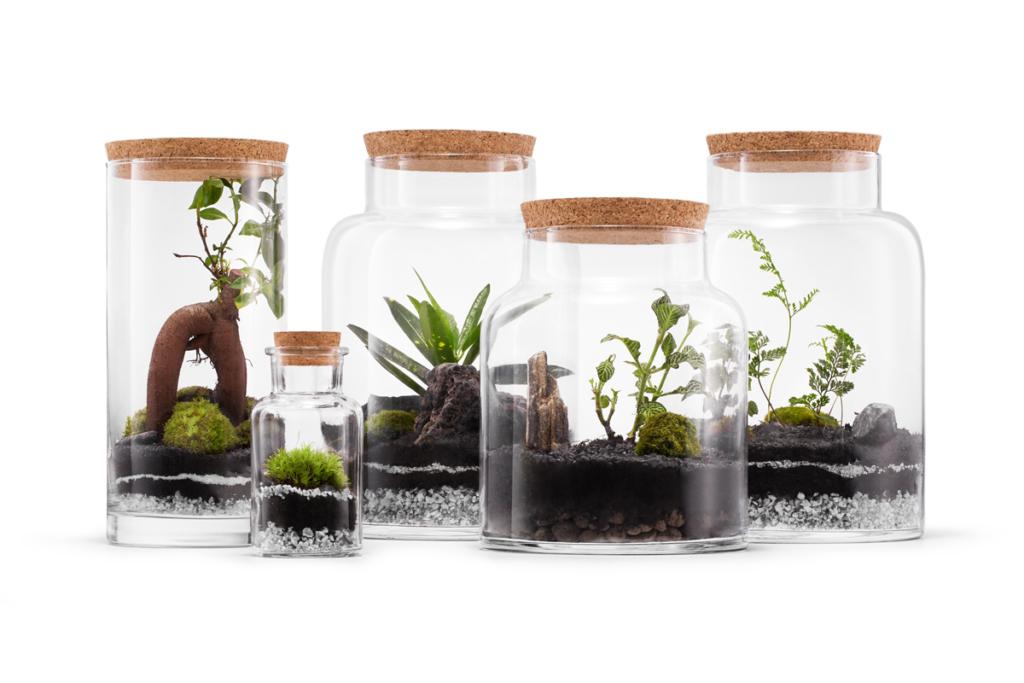 rośliny w słoiku na białym tle