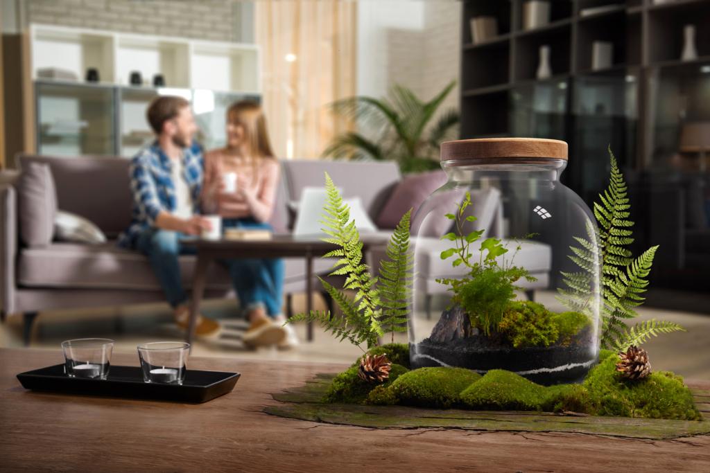 rośliny w słoiku na blacie wśród mchu i paproci fotografia produktowa