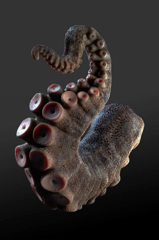 3D model squid